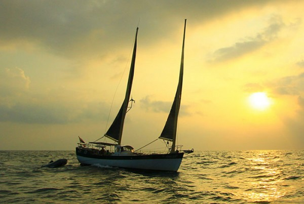 sunset sailing koh tao